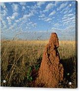 Termite Mound In Cerrado Grassland Emas Acrylic Print by Tui De Roy