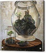 Terrarium Acrylic Print by Cynthia Decker