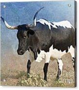Texas Longhorn #7 Acrylic Print by Betty LaRue