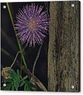 Thailand  Purple Wild Flowers Acrylic Print by David Longstreath