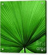 The Big Green Leaf Acrylic Print by Natalie Kinnear