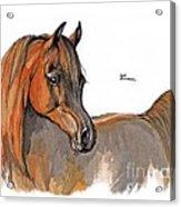 The Chestnut Arabian Horse 2a Acrylic Print by Angel  Tarantella
