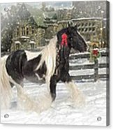 The Christmas Pony Acrylic Print by Fran J Scott