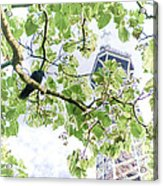 The Crow And The Eiffel Tower Acrylic Print by Olivier Le Queinec