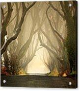 The Dark Hedges 2011 Acrylic Print by Pawel Klarecki
