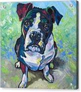 The Dog Acrylic Print by Ellen Marcus