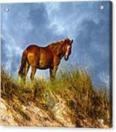 The Dune King Acrylic Print by Betsy C Knapp