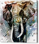 The Elephant Acrylic Print by Steven Ponsford