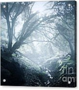 The Ents Are Going To War Acrylic Print by Kyle Walker