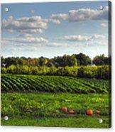 The Farm Acrylic Print by Joann Vitali