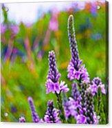 The Garden Palette Acrylic Print by Christi Kraft
