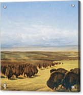 The Gathering Of The Herd Acrylic Print by William Jacob Hays