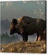 The Great American Bison Acrylic Print by Daniel Eskridge