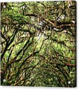 The Green Mile Savannah Ga Acrylic Print by William Dey