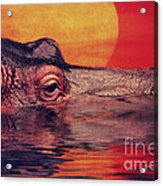 The Hippo Acrylic Print by Angela Doelling AD DESIGN Photo and PhotoArt