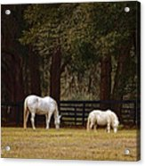 The Horse And The Pony - Standard Size Acrylic Print by Mary Machare