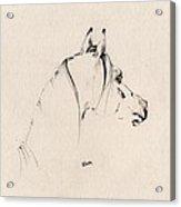 The Horse Sketch Acrylic Print by Angel  Tarantella