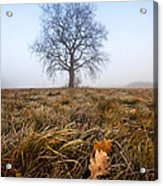 The Lone Oak Acrylic Print by Davorin Mance