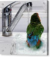 The Lovebird's Shower Acrylic Print by Terri Waters
