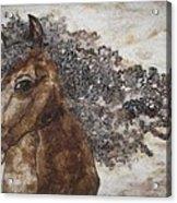 The Mane Affair Acrylic Print by Bonnie Nash