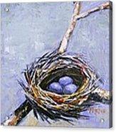 The Nest Acrylic Print by Brandi  Hickman