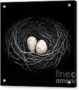 The Nest Acrylic Print by Edward Fielding