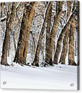 The Noreaster Acrylic Print by JC Findley