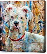 The Painter's Dog Acrylic Print by Judy Wood
