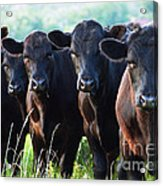 The Posers Acrylic Print by Rebecca Pickrel
