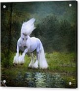 The Reflection Acrylic Print by Fran J Scott