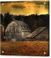 The Rose Farm Acrylic Print by Thomas Young
