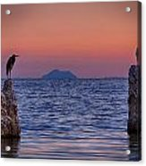 The Sentinels  Acrylic Print by Peter Tellone