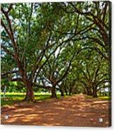 The Southern Way  Acrylic Print by Steve Harrington