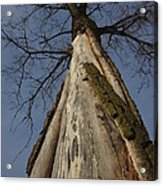 The Strange Tree Acrylic Print by Guy Ricketts