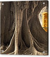 The Tree And The Post Box Acrylic Print by Mary Machare