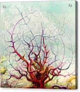 The Tree That Want Acrylic Print by Bjorn Eek