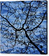 The Veins Of Time Acrylic Print by Andrew Pacheco