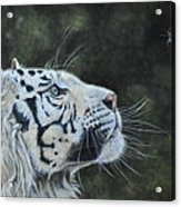 The White Tiger And The Butterfly Acrylic Print by Louise Charles-Saarikoski