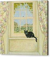 The Window Cat Acrylic Print by Ditz