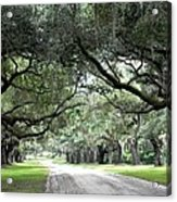 This Is The South Acrylic Print by Patricia Greer