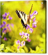 Those Summer Dreams Acrylic Print by Darren Fisher