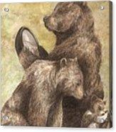 Three Bears Acrylic Print by Meagan  Visser