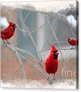 Three Cardinals In A Tree Acrylic Print by Dan Friend