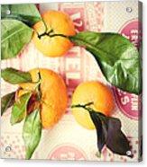 Three Tangerines Acrylic Print by Lupen  Grainne