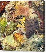 Tidal Pool Color Acrylic Print by Debbie Green