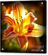 Tiger Lily Flower Acrylic Print by Elena Elisseeva
