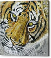 Tiger Painting Acrylic Print by Michelle Wrighton