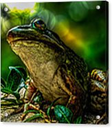 Time Spent With The Frog Acrylic Print by Bob Orsillo