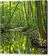 Tranquility In The Forest Acrylic Print by Adam Jewell