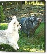 Treats For Woody And Schnitzel Acrylic Print by Artist and Photographer Laura Wrede